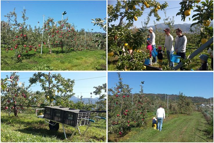 Apple Picking & Tasting Activity