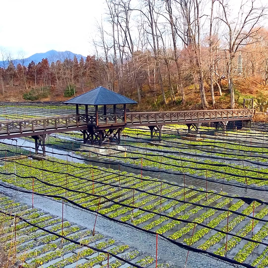 Wasabi Farm Discovery - Private Tour 3