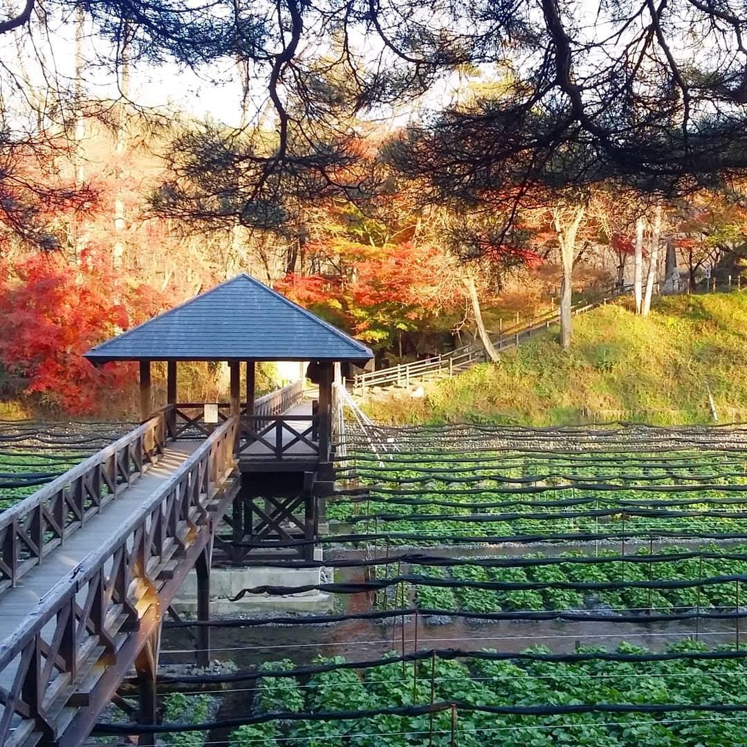 Wasabi Farm Discovery - Private Tour 7