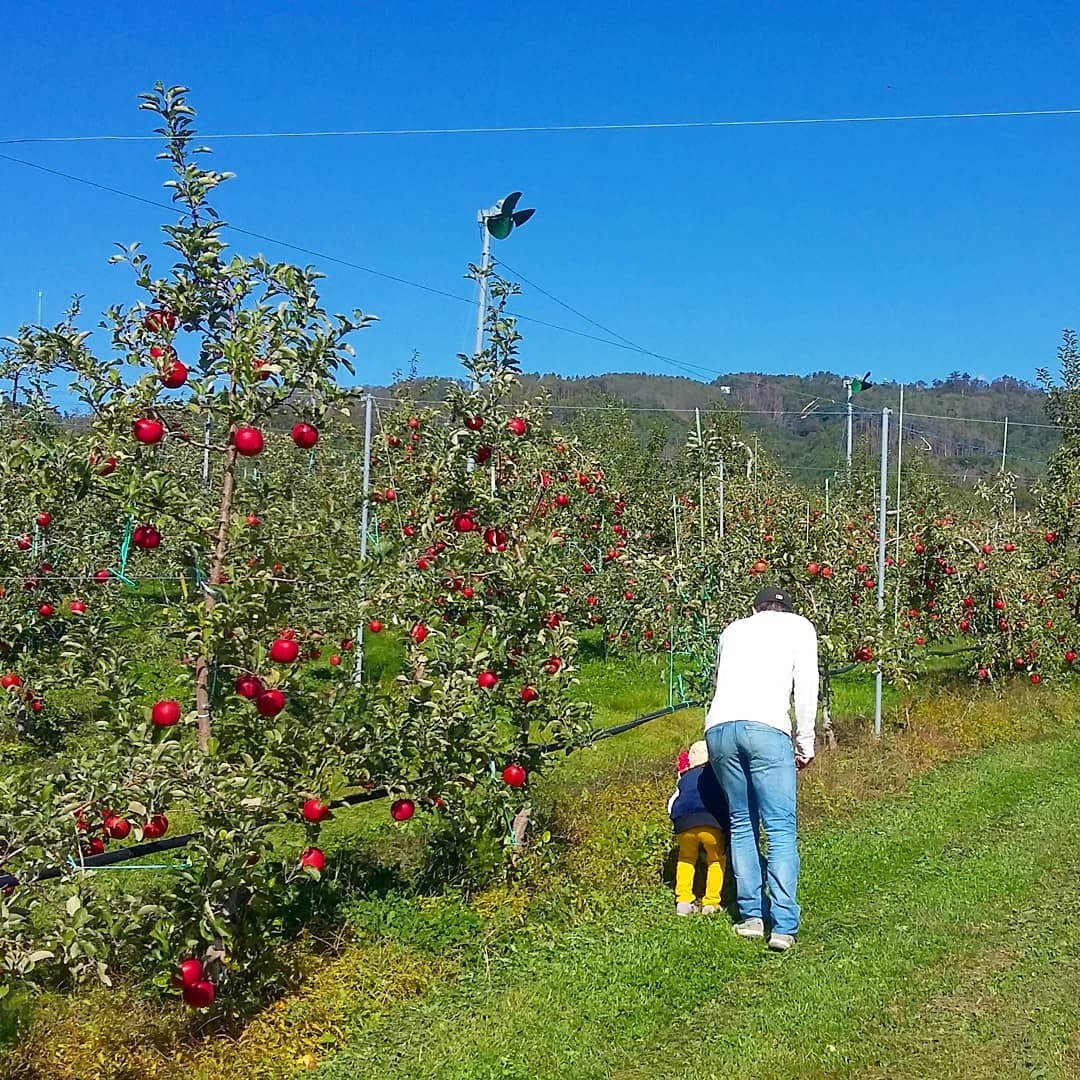 Apple Picking & Tasting Activity 8