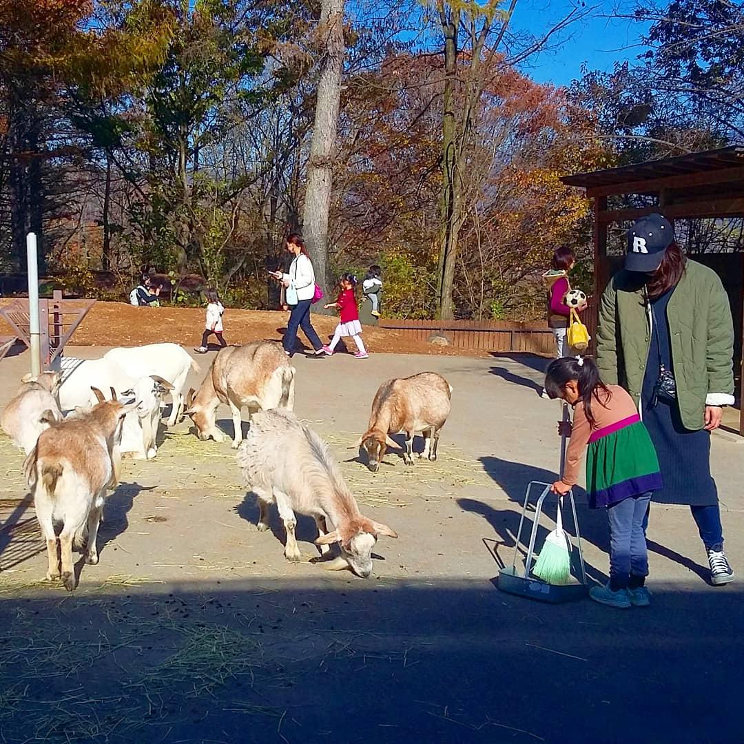 zoo du Parc des Alpes