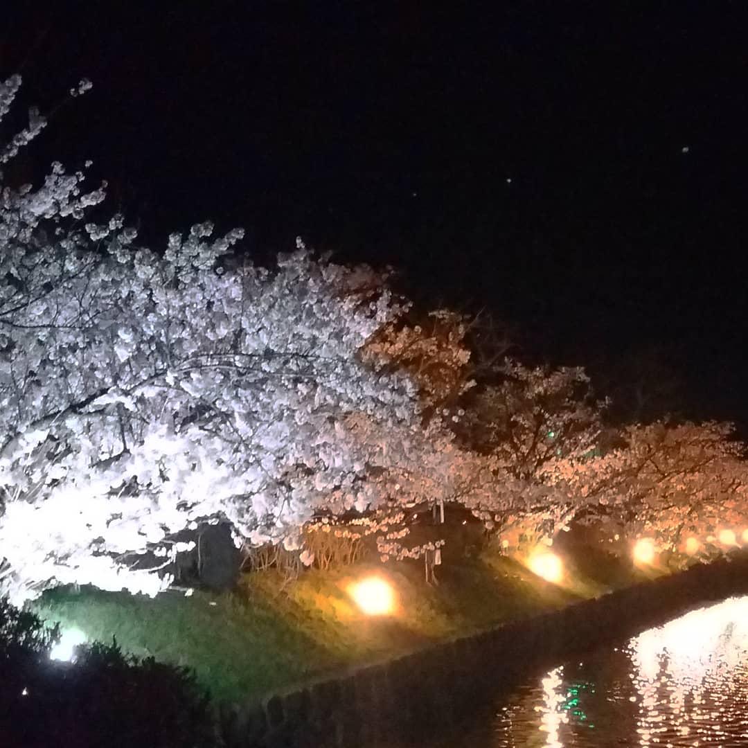 Observation Nocturne des Sakura 2