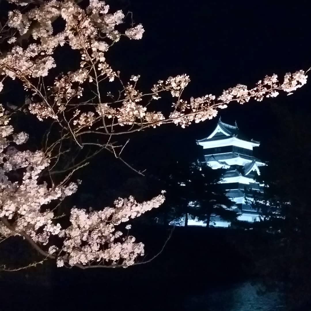 Observation Nocturne des Sakura 1