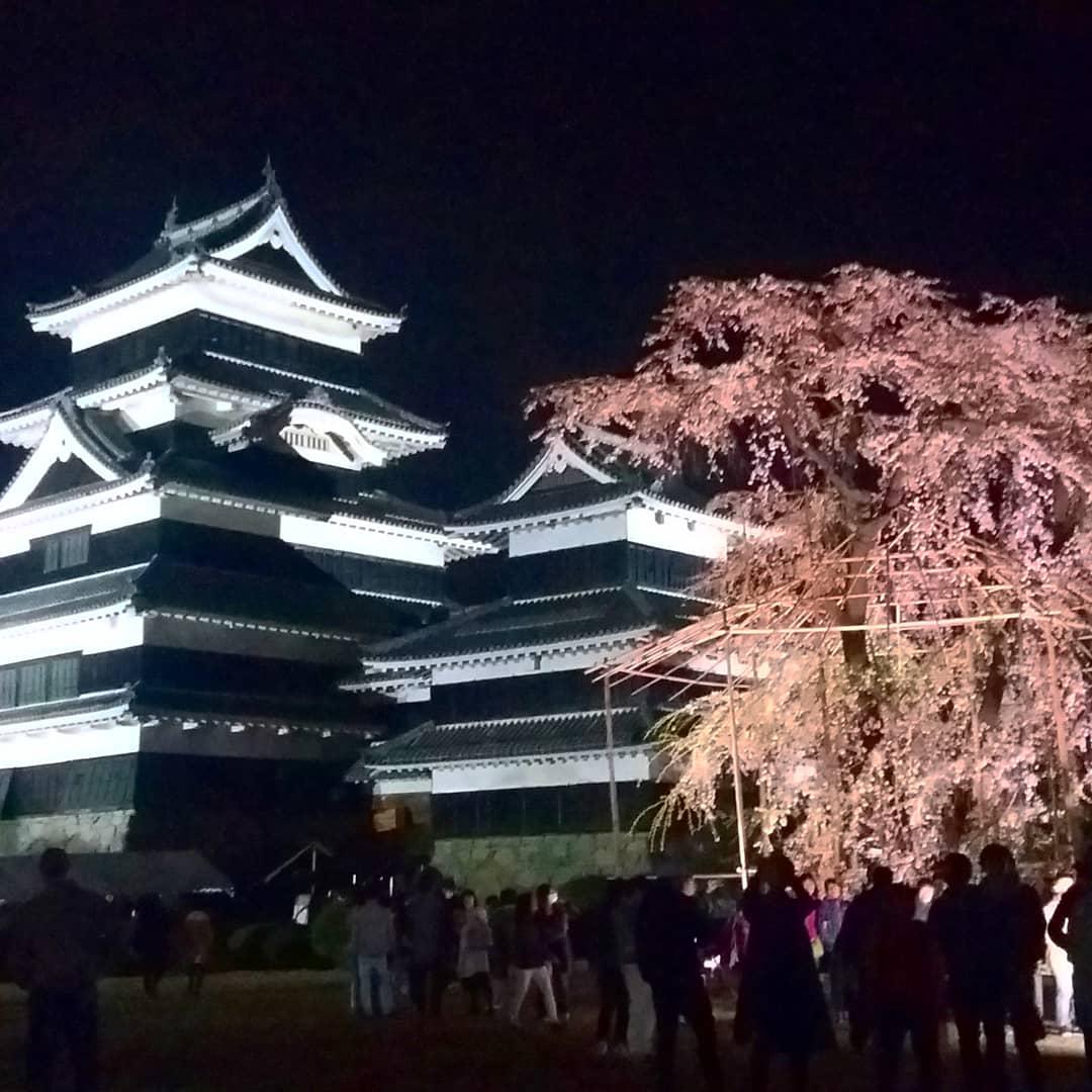 Observation Nocturne des Fleurs de Cerisiers