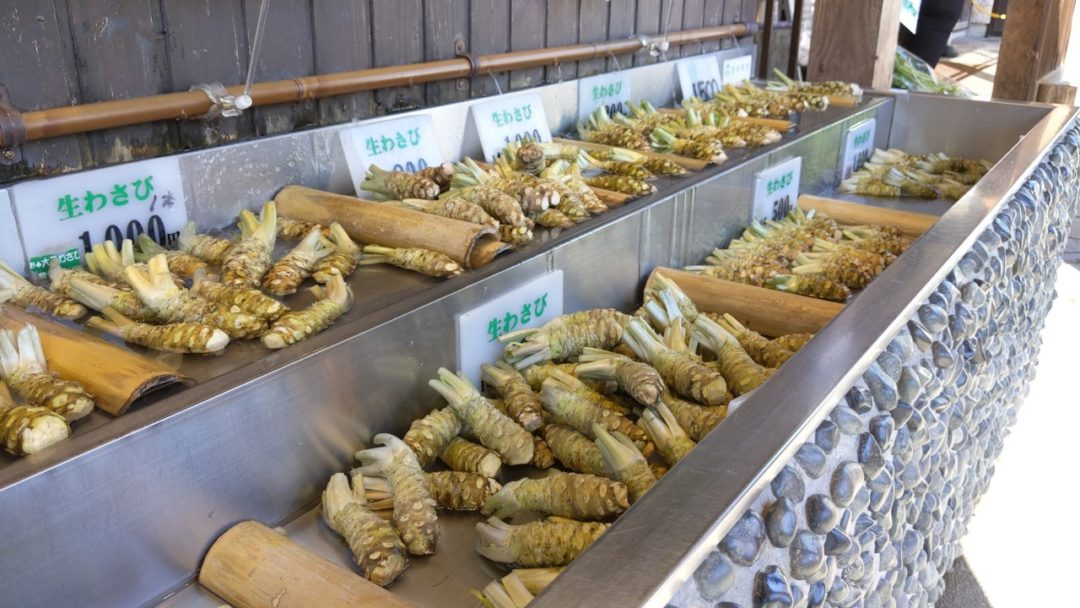 fresh real Wasabi in Matsumoto root