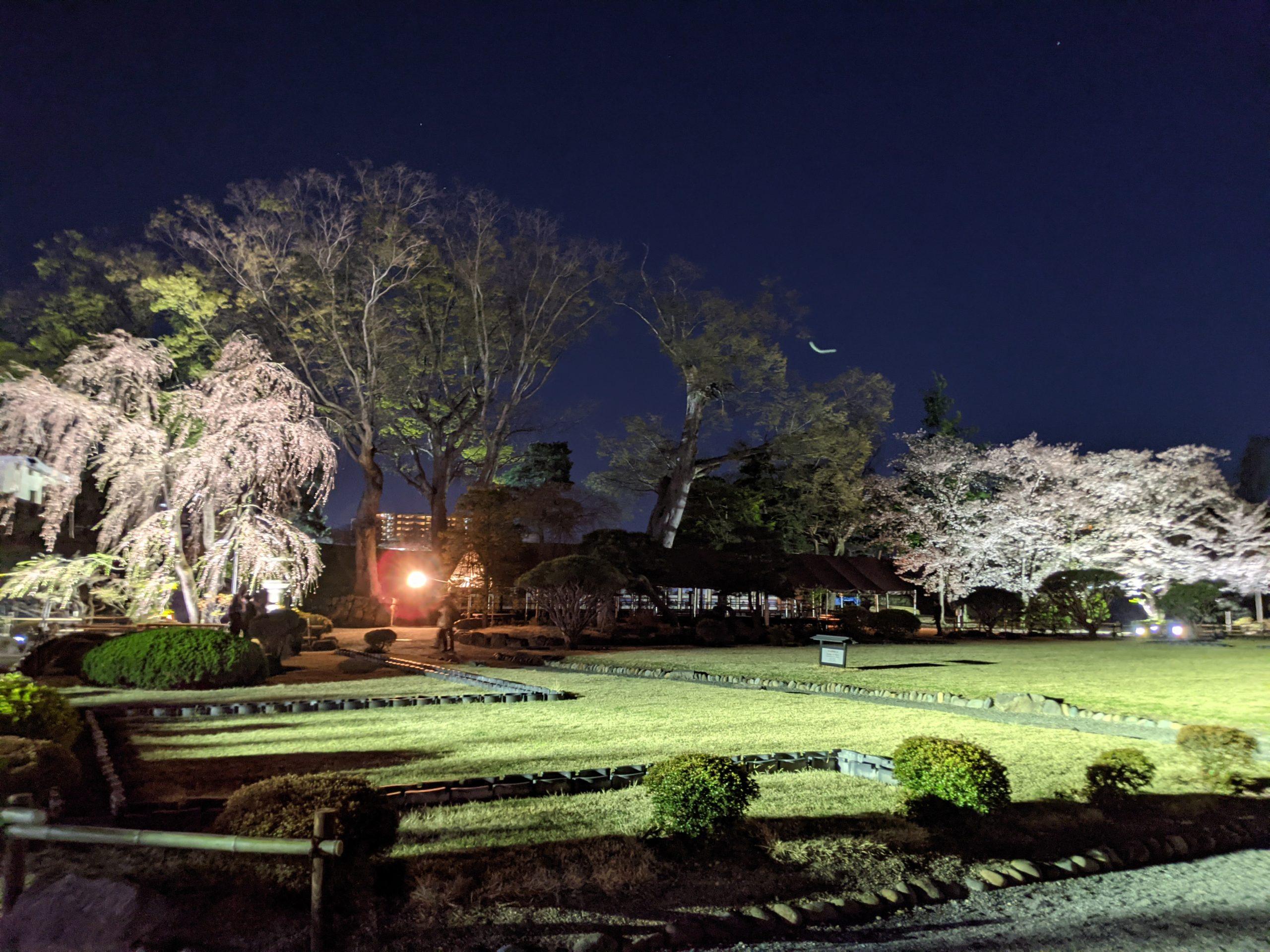 Sakura au Château de Matsumoto jardin
