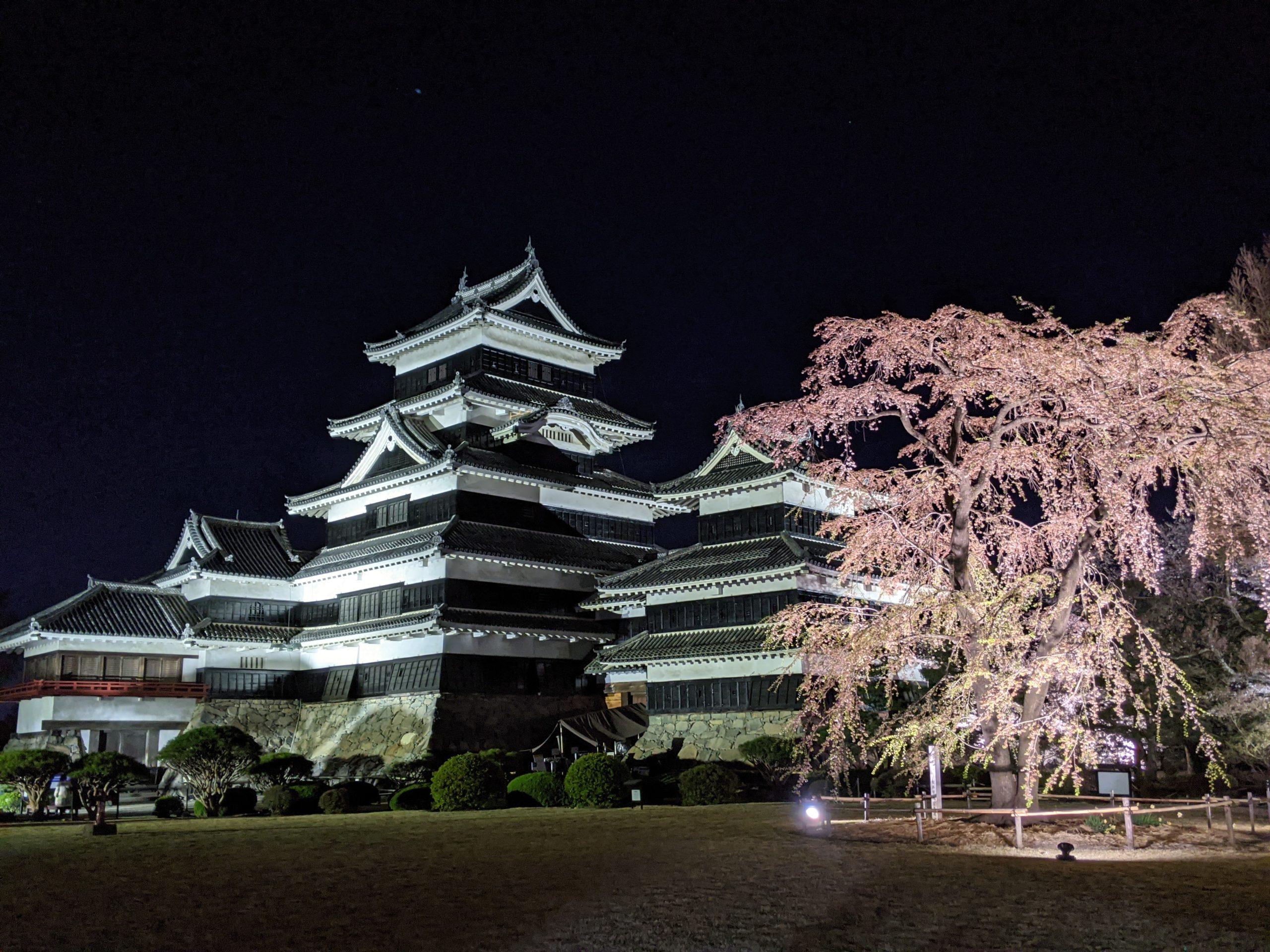 Sakura au Château de Matsumoto cerisiers