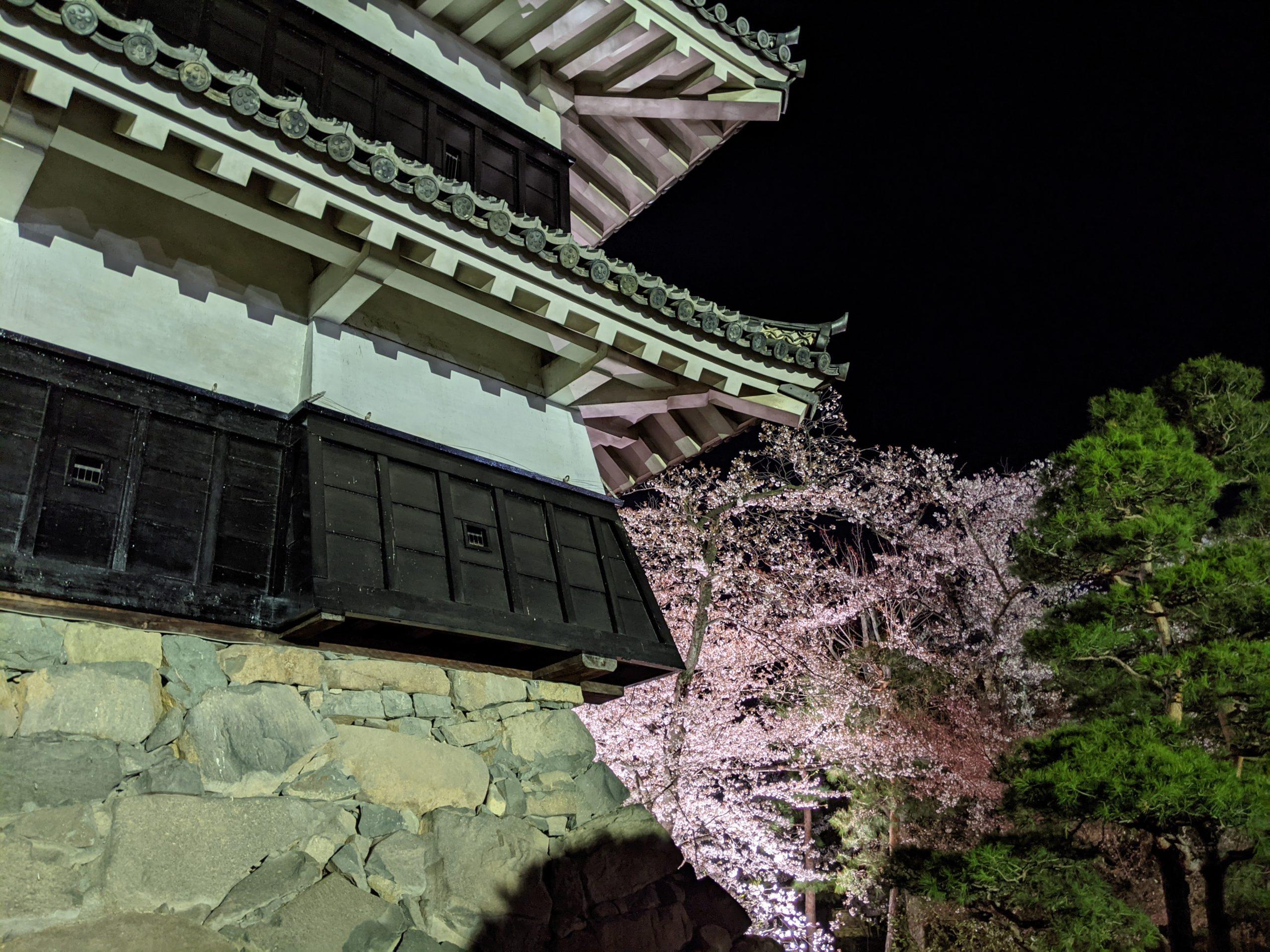 Sakura au Château de Matsumoto printemps
