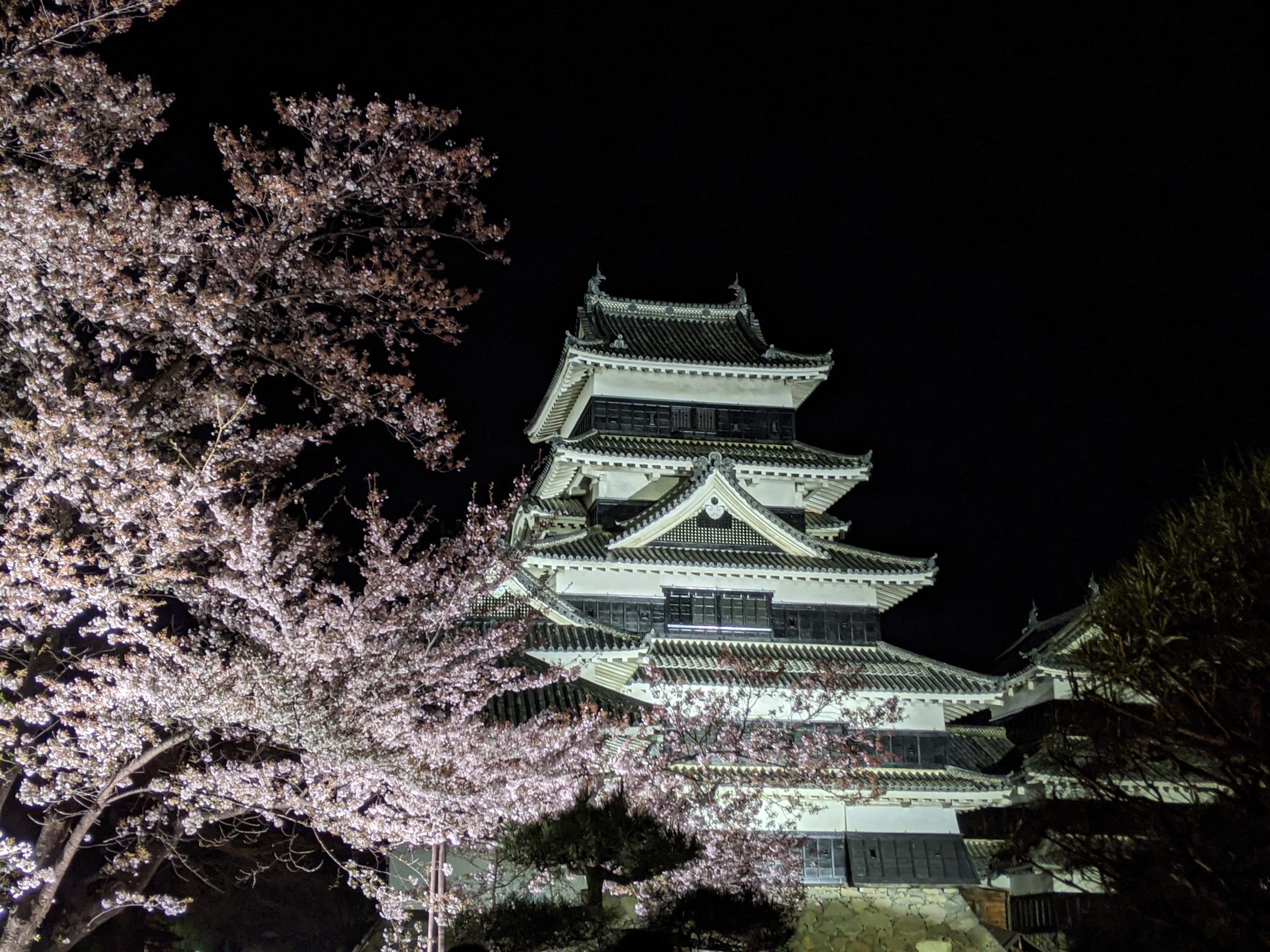 Sakura au Château de Matsumoto vue