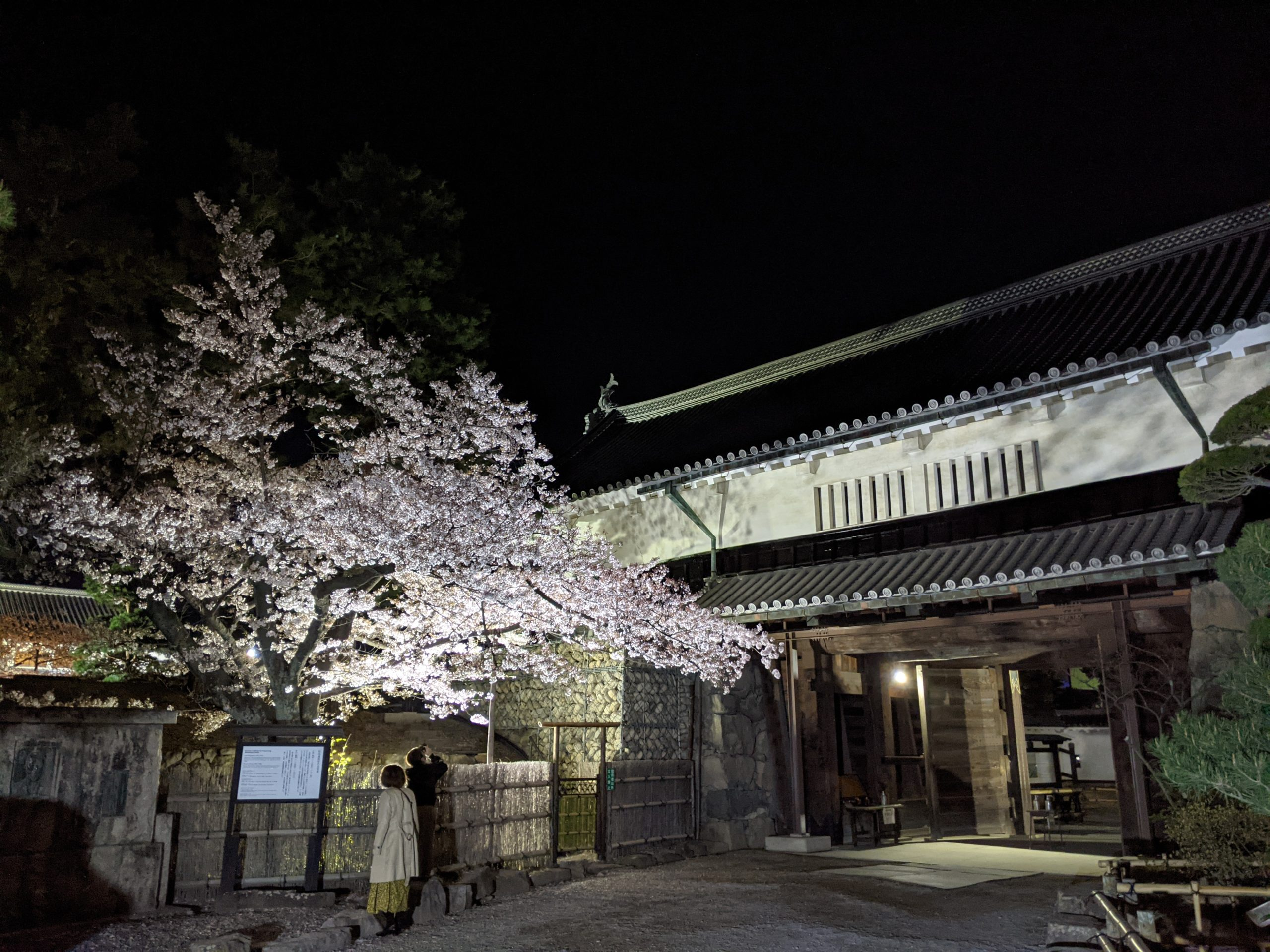 Sakura au Château de Matsumoto floraison
