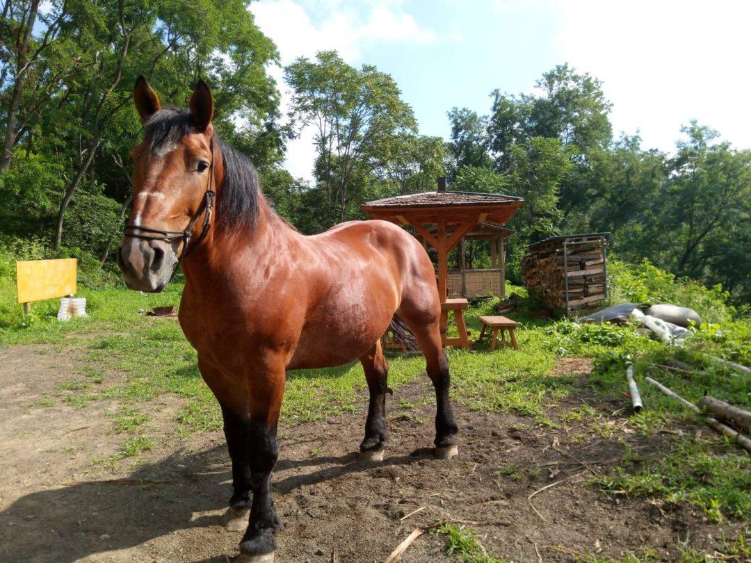 Ranch de Yamato cheval